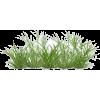 pic - 植物 -
