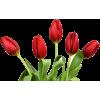 pic - Rośliny -
