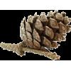 Pinecone - Natura -
