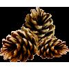 pinecones - Predmeti -