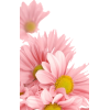 ping frower - Items -