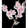 pink flower spray stem  - Piante -