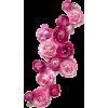 pink pansies  - Nature -