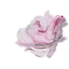 Pink Rose Flower - Rascunhos -