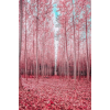 pink autumn forest - 自然 -