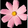 pink flower - その他 -