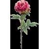 pink peonies flowers - Uncategorized -