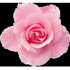 pink rose - その他 -