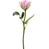 pink rose flower - Uncategorized -