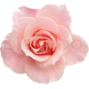 pink  rosse - Other -