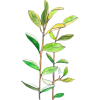 Plant.png - Nature -