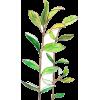 Plant.png - Natureza -