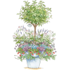 plant - Other -
