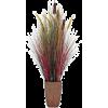 Plant Plants Beige - 植物 -