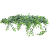 Plant Plants Green - Plants -