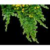 plant - Nature -