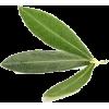 plant - Otros -