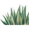 plant - Pflanzen -