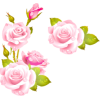plantas - Plants -