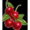 plants - Food -