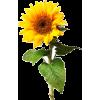 plants - Pflanzen -