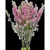 plants - Растения -