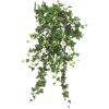 plants - Rastline -