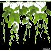 plants foliage - Piante -