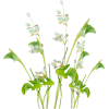 png, plant, plants, flowers, flower - 植物 -