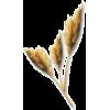 png - Plants -