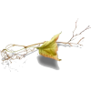 png - 植物 -