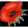 poppy - Plants -
