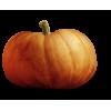 pumpkin - Items -