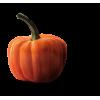 pumpkin - Predmeti -