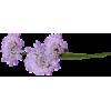 purple flower - Illustraciones -