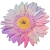 purple/pink flower - Piante -
