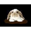 rabbit - Animals -