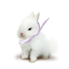 rabbit - Animais -