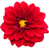 Red Flower - Plants -