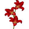 red flowers - Items -
