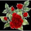 red roes - Plantas -