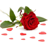 red rose - Piante -