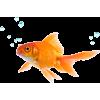 riba - Zwierzęta -
