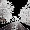 road forest winter photo - Uncategorized -