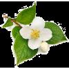 rośliny - Plants -