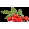 rosa canina - Fruit -