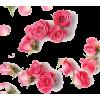 rose - Rastline -