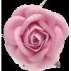 rose - Artikel -