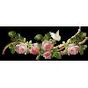 rose border - Gürtel -
