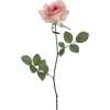 rose flower - Uncategorized -